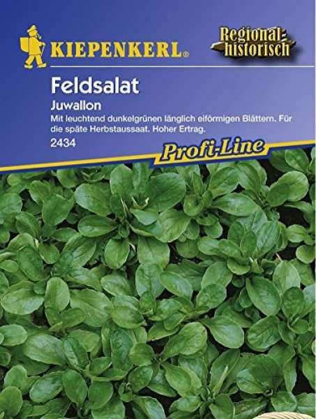 Feldsalat NE Juwallon