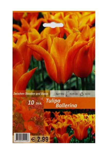 Tulipa Ballerina Orange