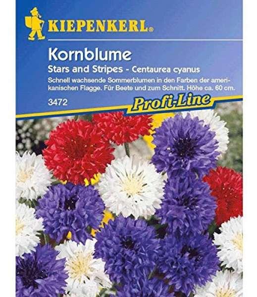 Kiepenkerl Kornblume Stars and Stripes