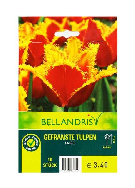 Bellandris Gefranste Tulpen Rot/Gelb