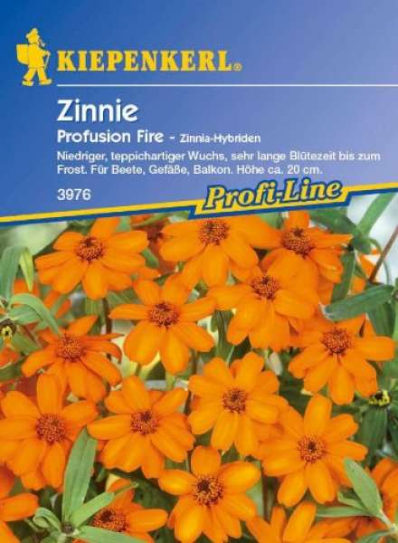 Kiepenkerl Zinnien Profusion Fire