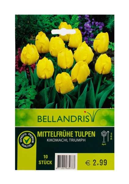 Bellandris Mittelfrühe Tulpen gelb
