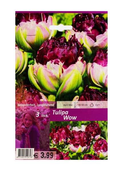 Tulipa Wow