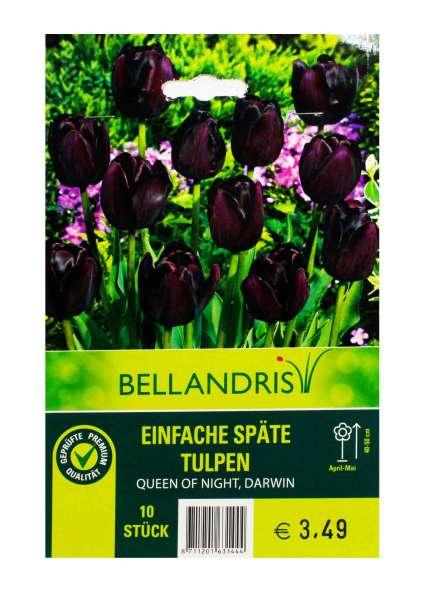 Bellandris Einfache Späte Tulpen
