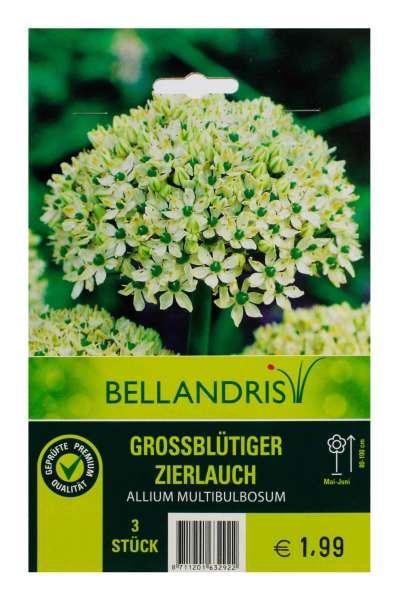 Allium Multibulbosum x3 10/12