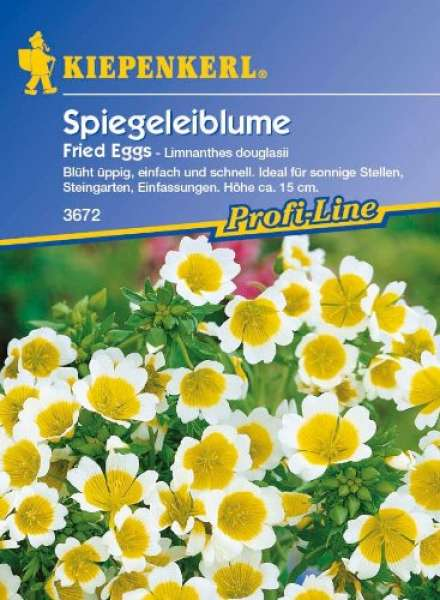 Kiepenkerl Spiegeleiblume Fried Eggs
