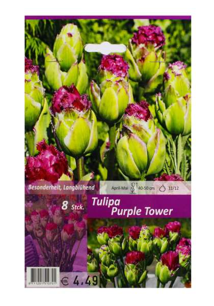 Tulipa Purple Tower