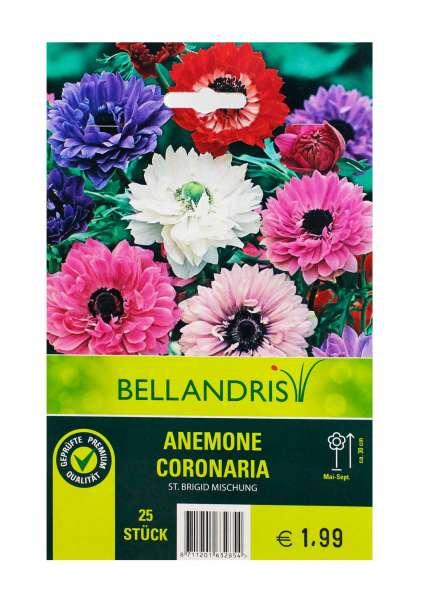 Bellandris Anemone Coronaria Mischung