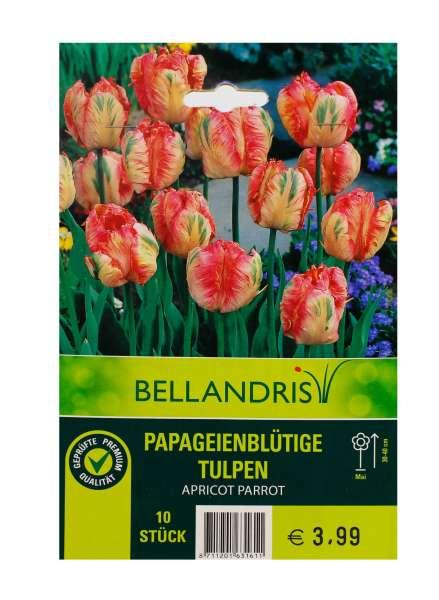 Bellandris Papageienblütige Tulpen