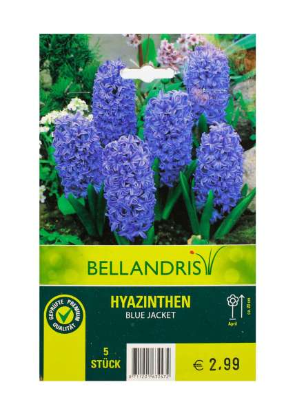 Bellandris Hyazinthen Blau