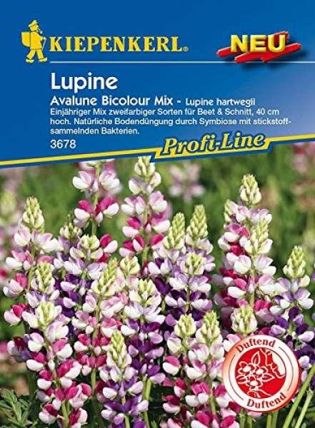 Kiepenkerl Lupine Avalune Bicolour Mix