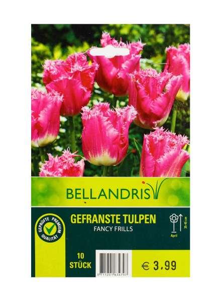Bellandris Gefranste Tulpen Pink