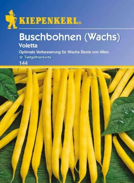 Kiepenkerl Buschbohnen Voletta