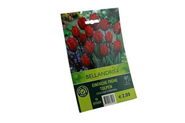 Bellandris Frühe Tulpen Rot
