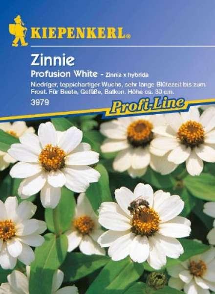Kiepernkerl Zinnien Profusion White