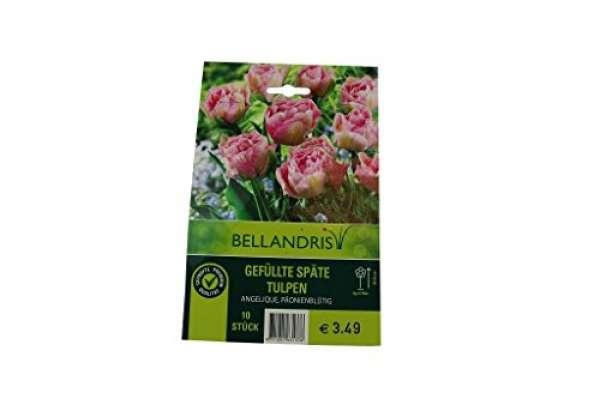 Bellandris Gefüllte Späte Tulpen