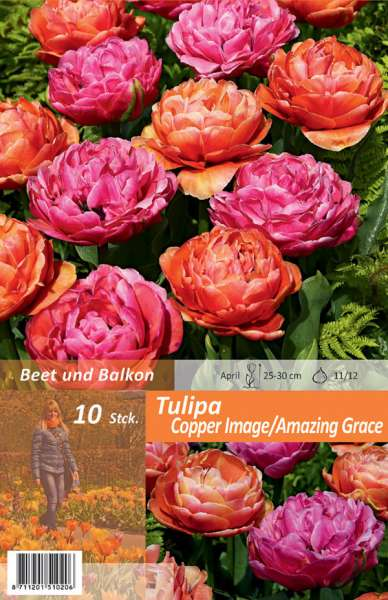 Tulipa Copper Image / Amazing Grace