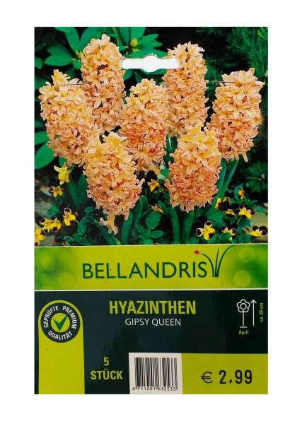 Bellandris Hyazinthen orange
