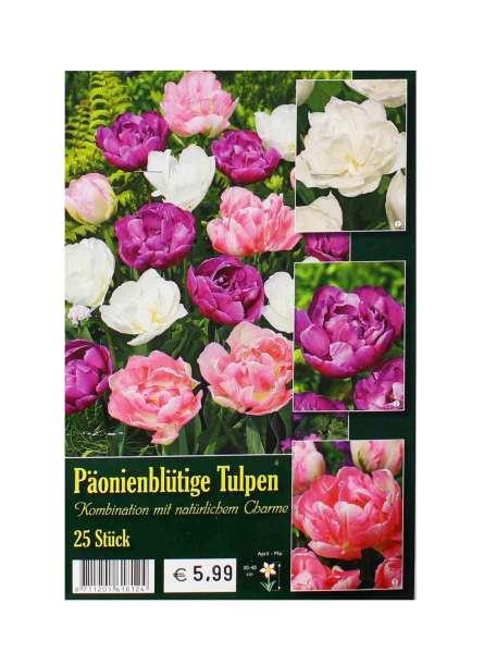 Päonienblütige Tulpen