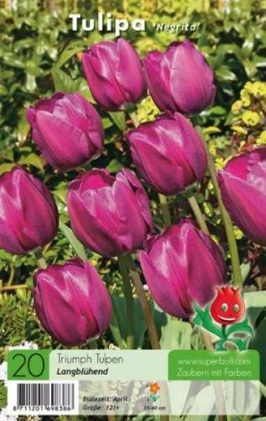 "Triumph Tulpen ""Negrita"""