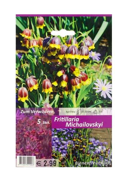 Glockenlilie Fritillaria Michailovskyi