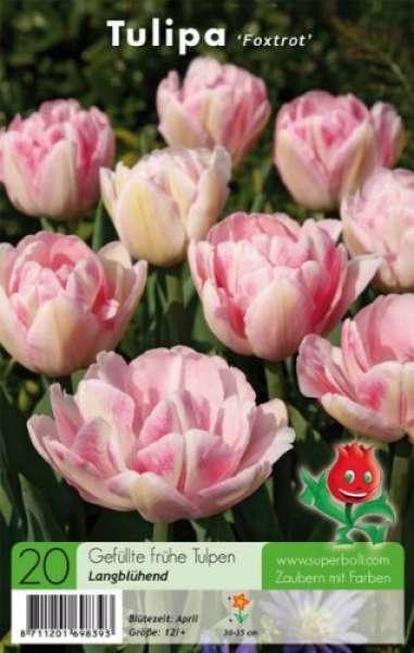 Gefüllte frühe Tulpen