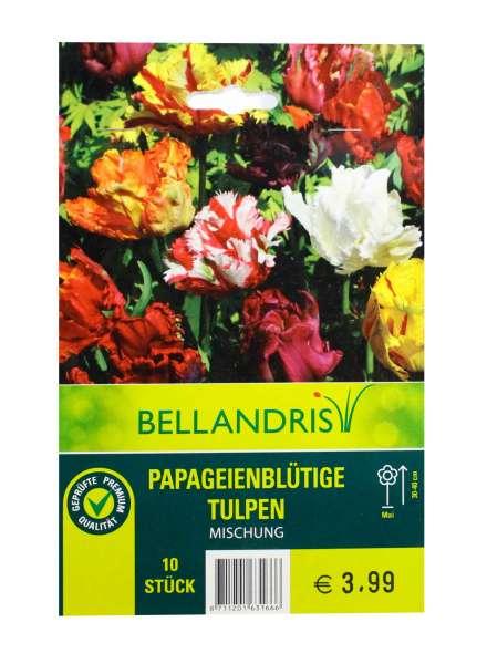 Bellandris Papageienblütige Tulpen Mischung