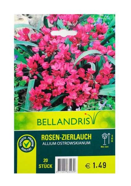 Bellandris Rosen - Zierlauch