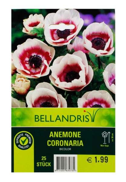 Bellandris Anemone Coronaria