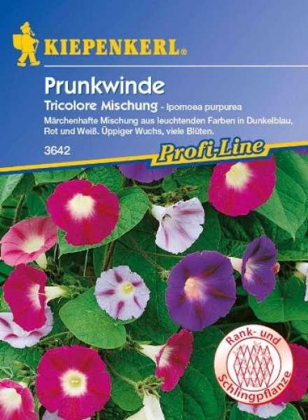 Kiepenkerl Prunkwinde Tricolore