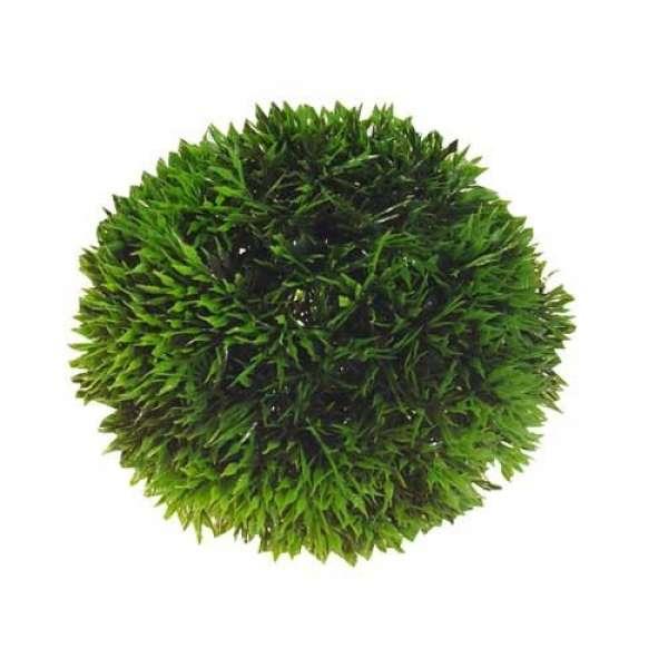 Plant Ball, 9 cm