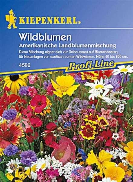 Kiepenkerl Wildblumen, amerikanische Landblumenmischung