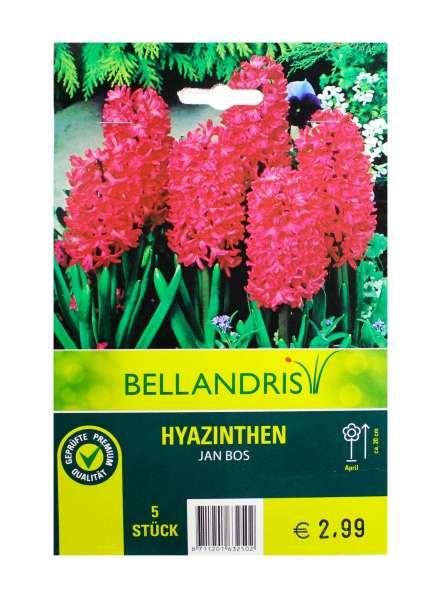 Bellandris Hyazinthen Rot