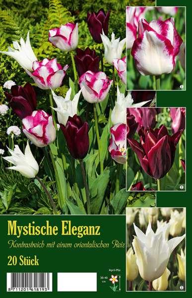 Tulpenmischung Mystische Eleganz