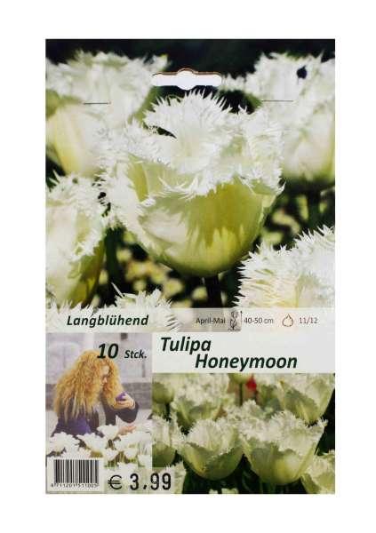 Tulipa Honeymoon