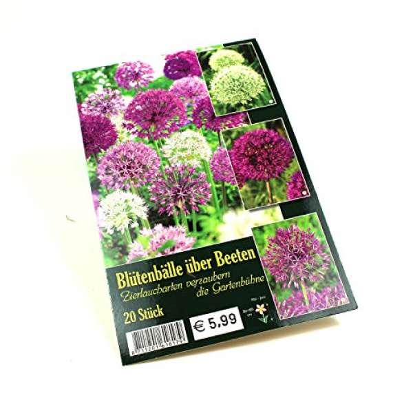 Blütenbälle über Beeten Zierlauch