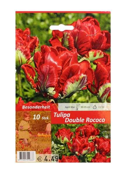 Tulipa Double Rococo