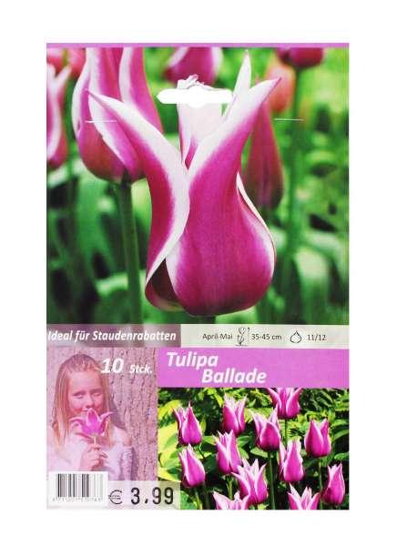 Tulipa Ballade